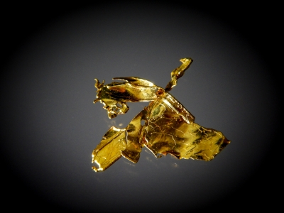 Gold from South Fork Feather River, Plumas County, California, USA [db_pics/update7/ML00471a.jpg]